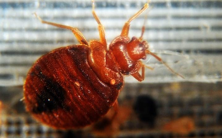 Tech from the Rosetta Comet Mission Repurposed to Sniff Out Bed Bugs