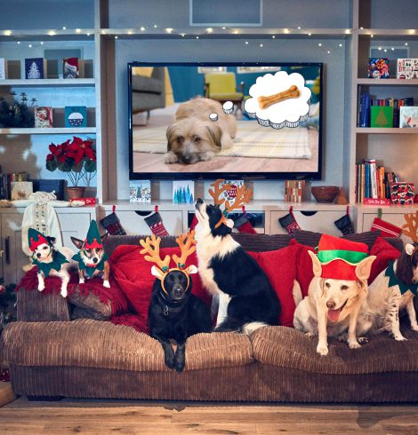 Louis Walsh Narrates New Canine Christmas Movie