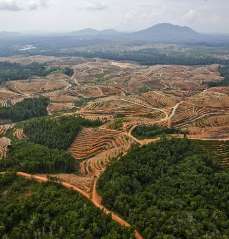 Iceland Bans Palm Oil from Its Brand Products