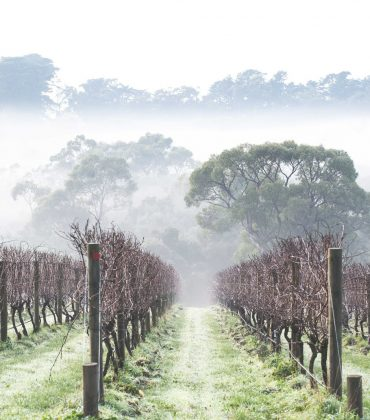 Australian Winemakers Return to the UK