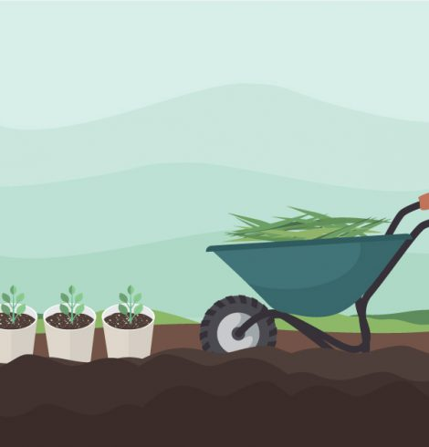 How to make preparations to your garden for the warm months
