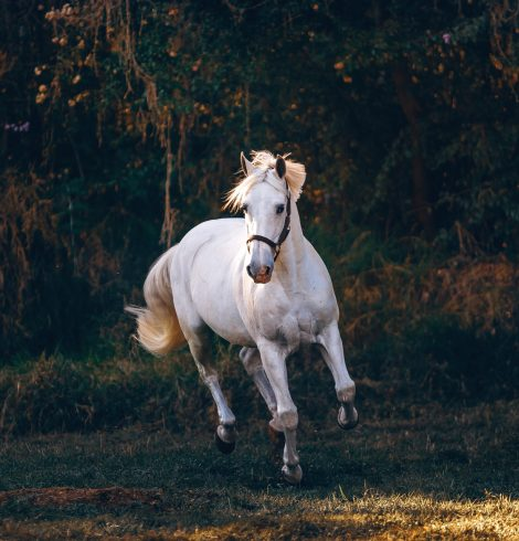 Top Care Tips for Your Horse