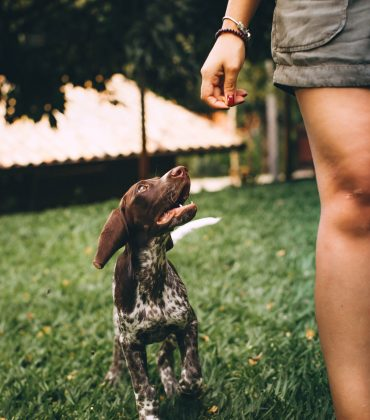What Can Affect Your Dog's Behaviour?