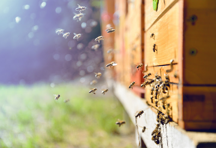 From Bloom to Bottle — How Bees Make Honey